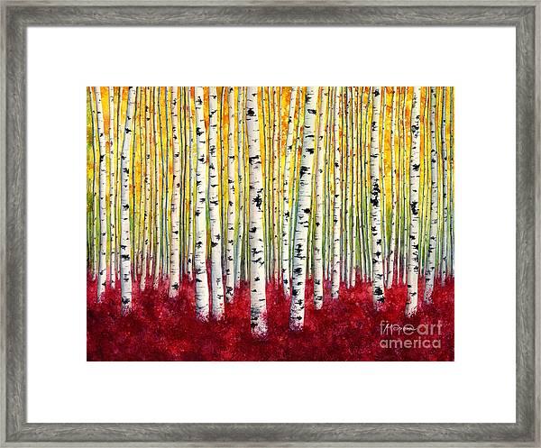 Silver Birches Framed Print