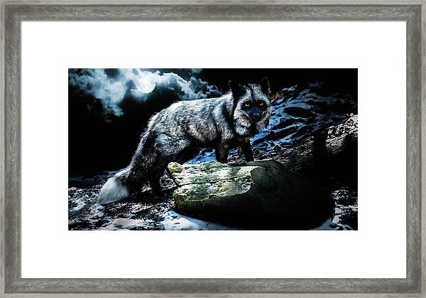 Silver Fox In Moonlight. Framed Print