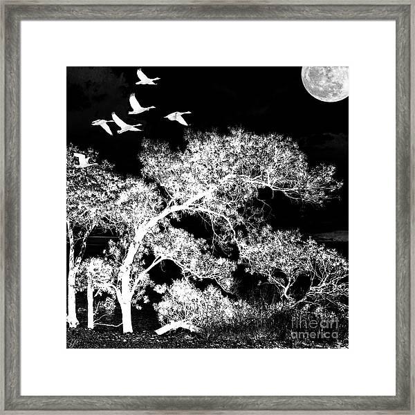 Silver Nights Framed Print