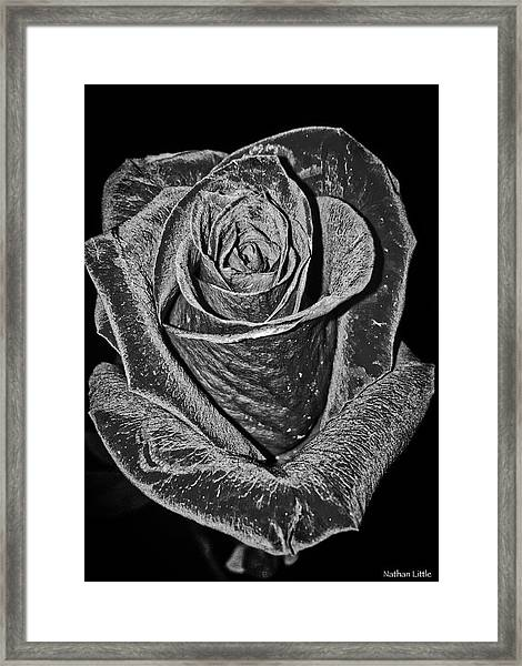 Silver Rose Framed Print