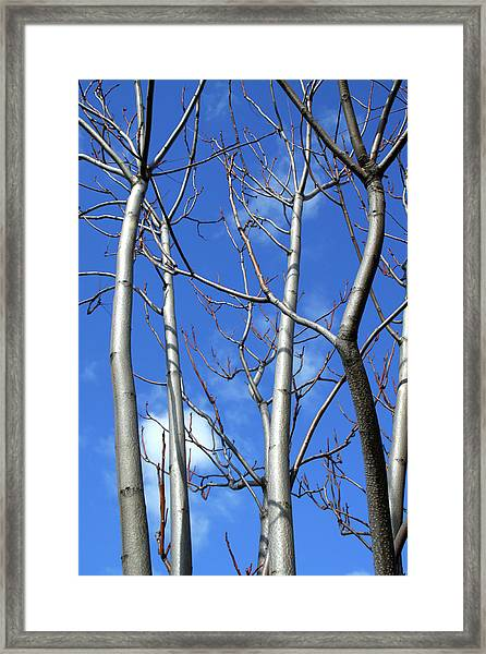 Silver Smooth Framed Print