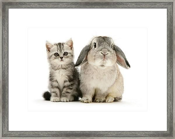 Silver Tabby And Rabby Framed Print