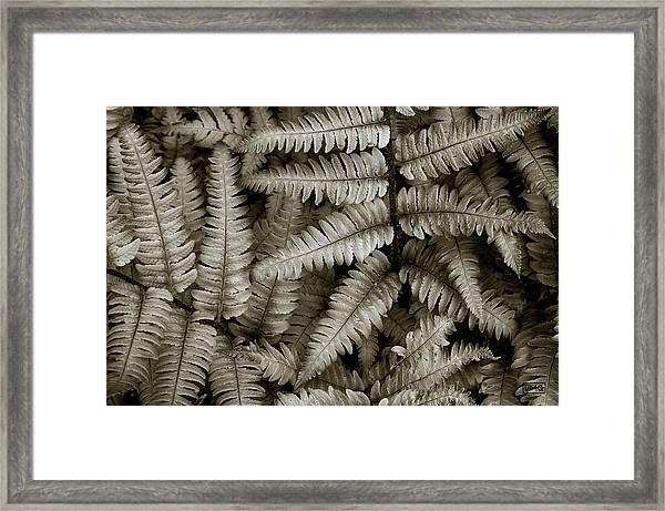 Silvery Ferns Framed Print