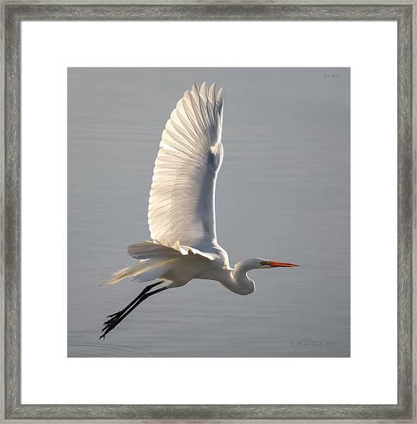 Simple Elegance Framed Print