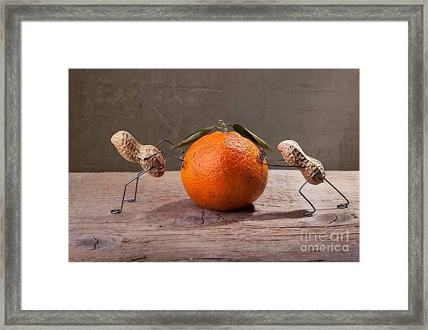 Simple Things - Antagonism Framed Print