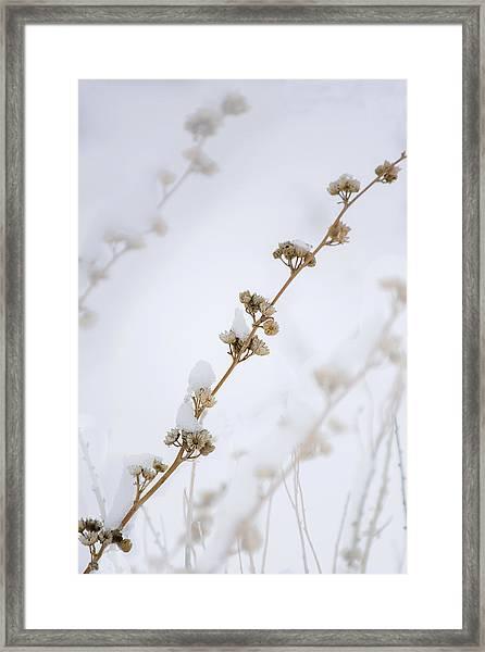 Simplicity Of Winter Framed Print