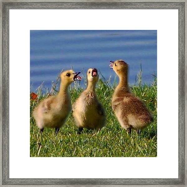 Singing Trio Framed Print