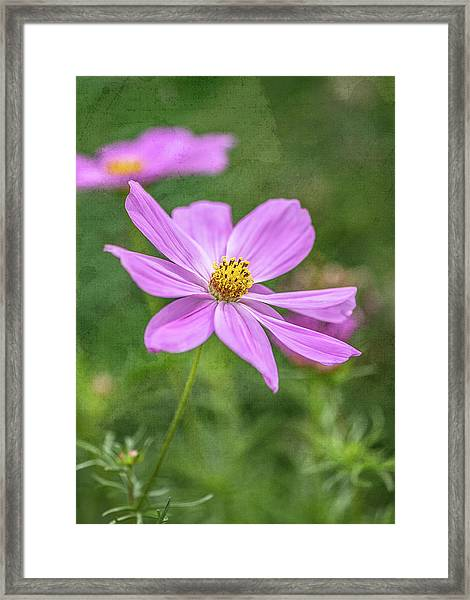 Single Perfection Framed Print