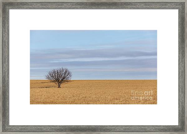 Single Tree In Large Field With Cloudy Skies Framed Print