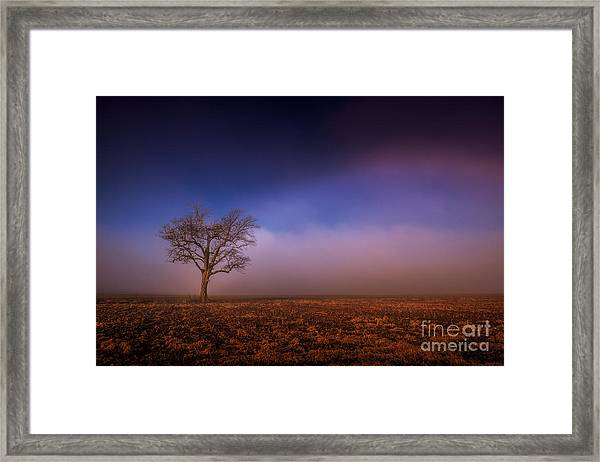 Single Tree In The Mississippi Delta Framed Print