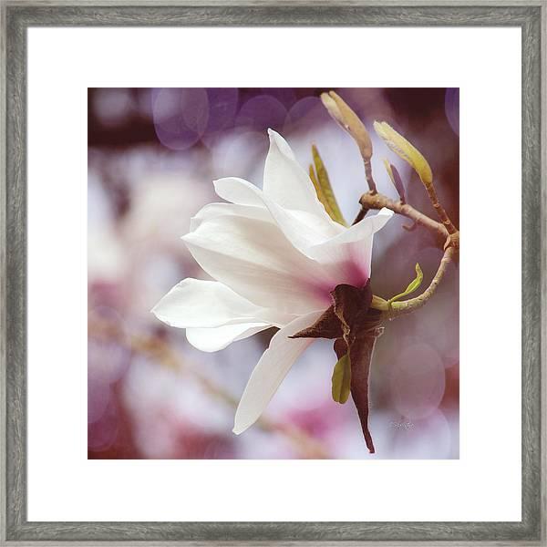 Single White Magnolia Framed Print