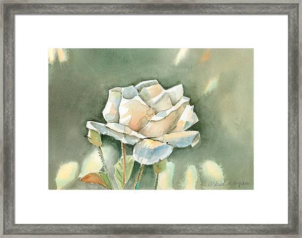 Single  White Rose Framed Print