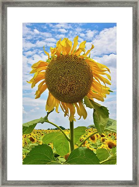 Framed Print featuring the photograph Sister Golden Hair by Skip Hunt