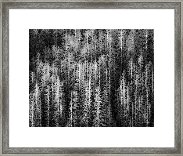 Sitka Abstraction Framed Print