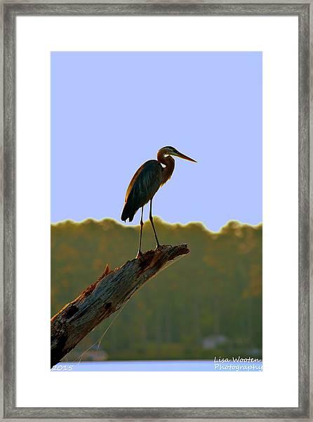 Sitting High On The Log Framed Print