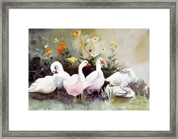 Six Quackers Framed Print