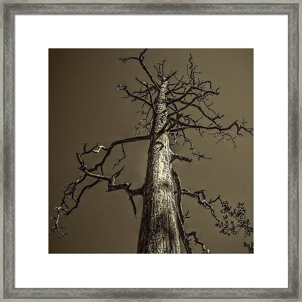 Skeletal Tree Sedona Arizona Framed Print