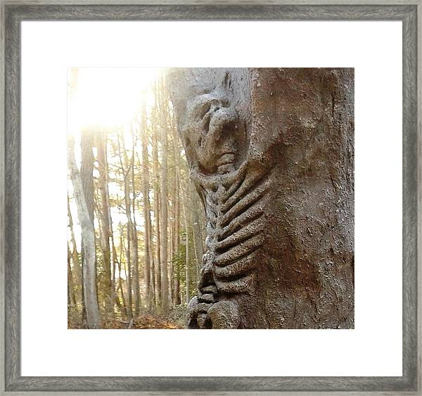 Skeleton Tree Framed Print