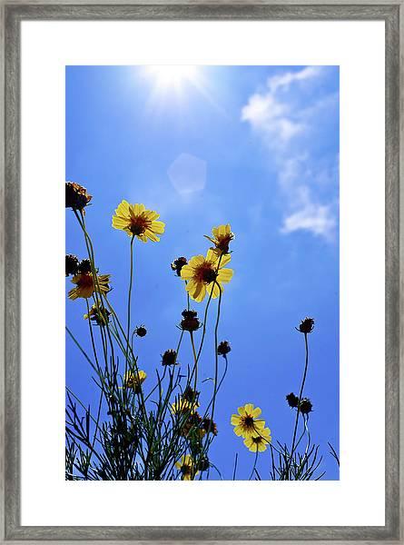 Sky Flowers Framed Print