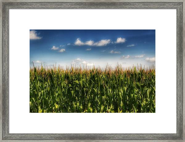 2005 - Sky High Corn Framed Print