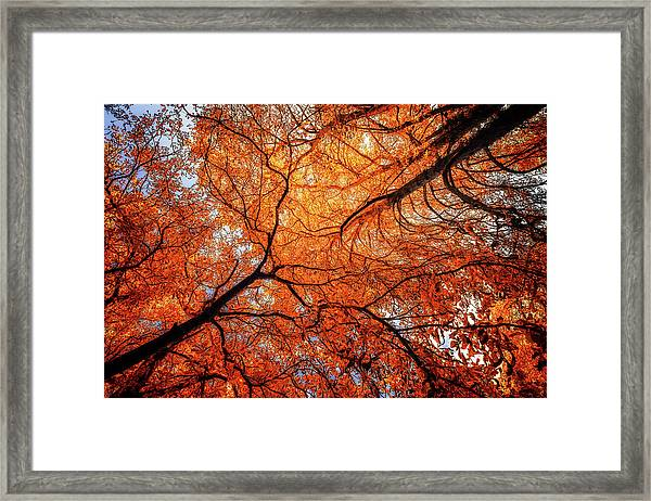 Sky Roots In Forest Red Framed Print