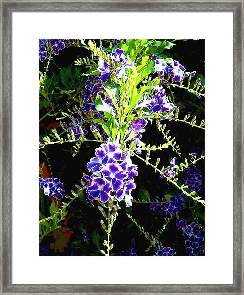Sky Vine In Bloom Framed Print