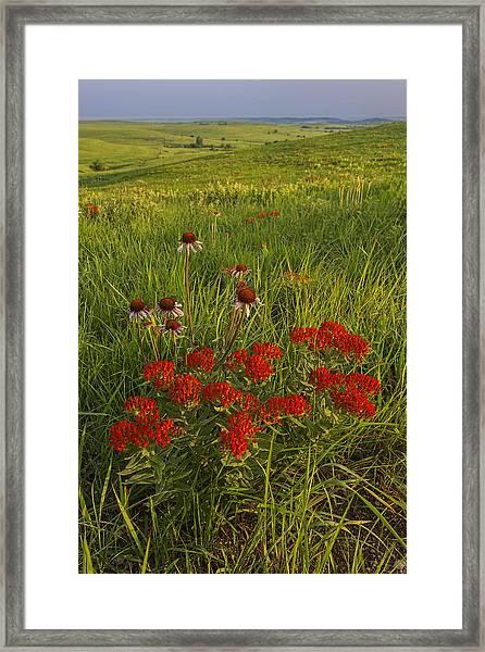 Skyline Bouquet Framed Print