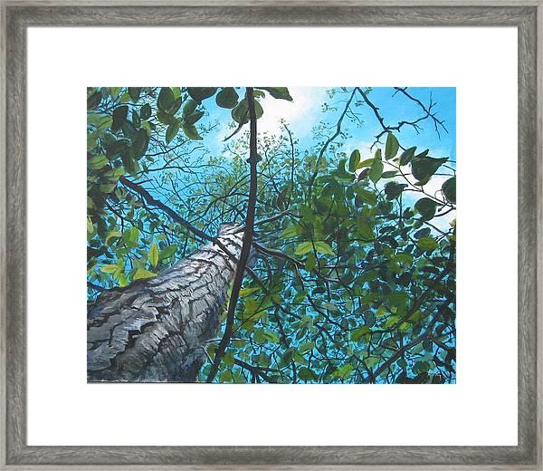 Skyward Framed Print