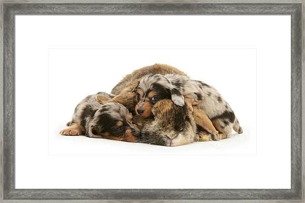 Sleep In Camouflage Framed Print
