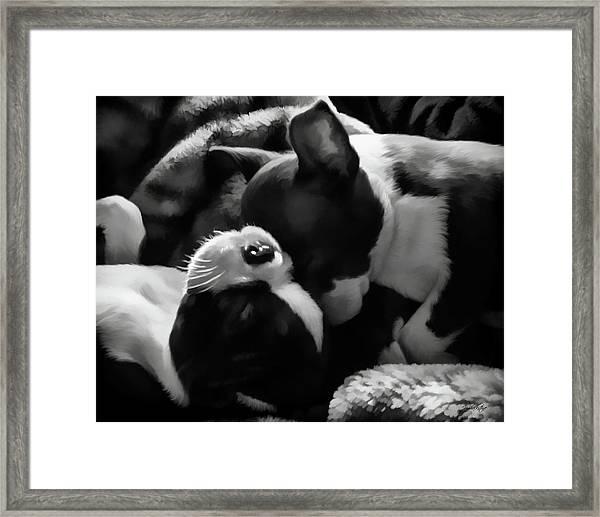 Sleeping Beauties - Boston Terriers Framed Print