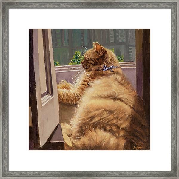 Sleeping Cat Framed Print by Barbara Tyler Ahlfield