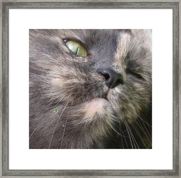 Sleeping Cat Portrait Framed Print by Valia Bradshaw