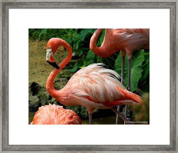 Sleeping Flamingo Framed Print