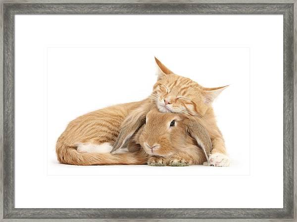 Sleeping On Bun Framed Print