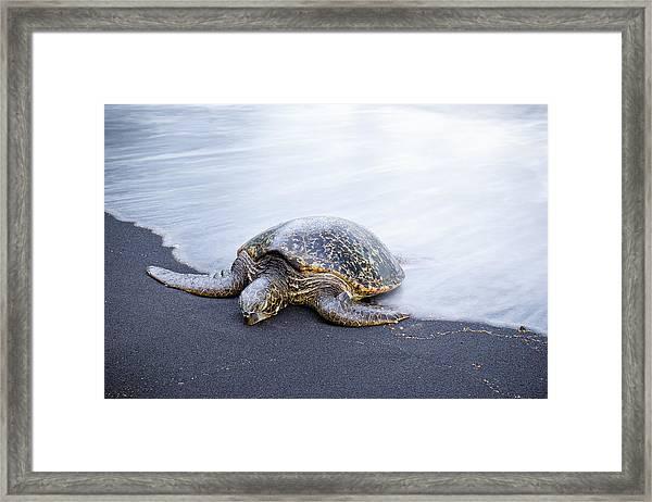 Sleepy Honu Framed Print