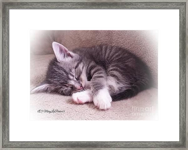 Sleepy Kitten Bymaryleeparker Framed Print