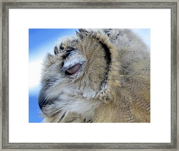 Framed Print featuring the photograph Sleepy Owl by Bob Slitzan