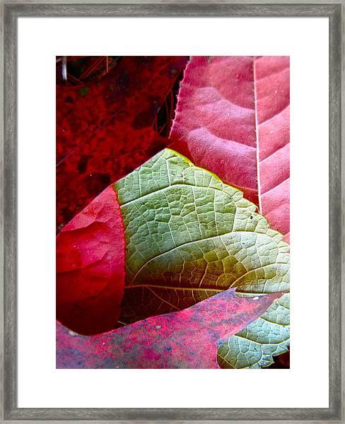 Slices Of Fall Framed Print