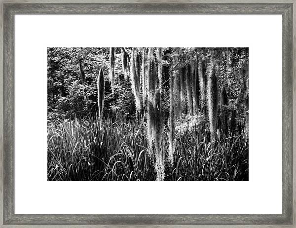 Slidell Spanish Moss Framed Print