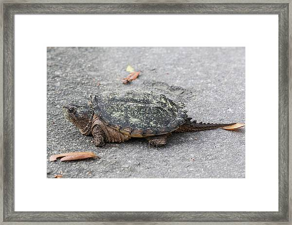 Framed Print featuring the photograph Slow Crossing 3 March 2018 by D K Wall