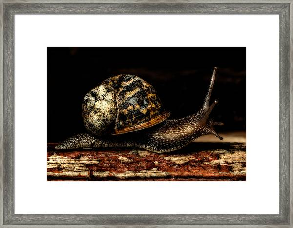 Framed Print featuring the photograph Slow Mover by Nick Bywater
