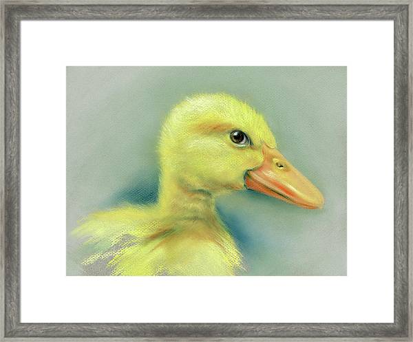 Sly Little Duckling Framed Print