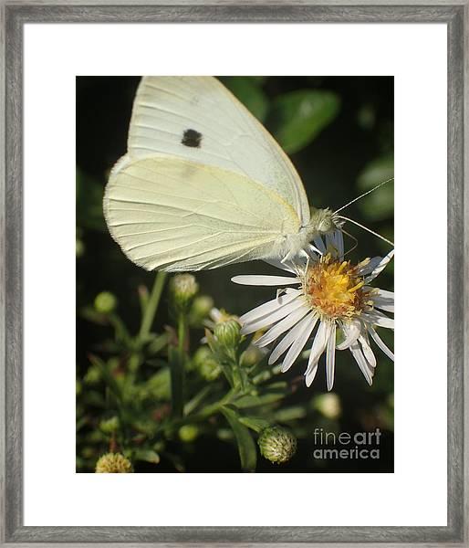 Sm Butterfly Rest Stop Framed Print