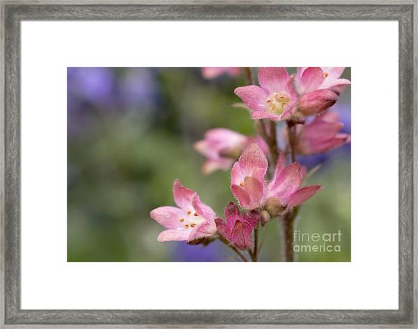 Small Flowers Framed Print