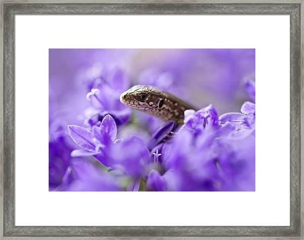Small Lizard Framed Print