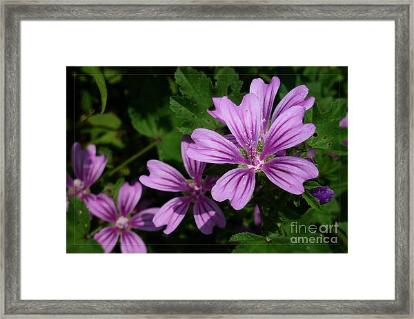 Small Mauve Flowers 6 Framed Print