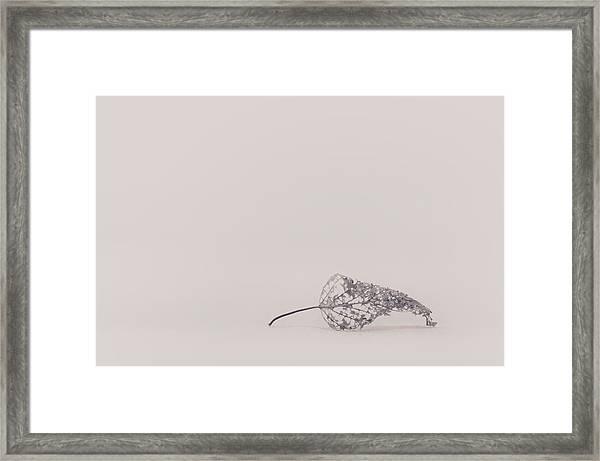 Smallest Leaf Framed Print