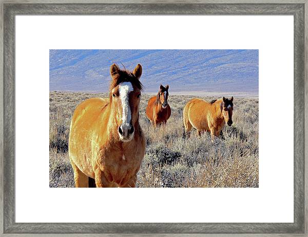 Smile - Mustang Mares Of Eastern Sierra  Framed Print