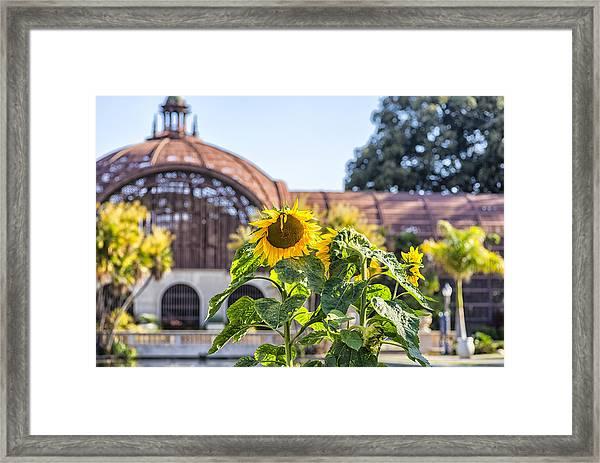 Sunflower Smile Framed Print