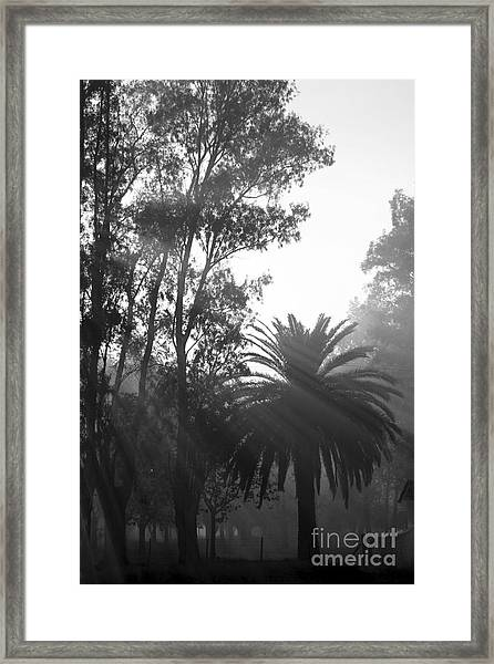Smoky Morning Trees Framed Print